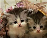 Two Grey Tabby Kittens Explore A Pretty Basket