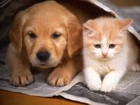 Puppy and Kitten Newspaper Reading Buddies