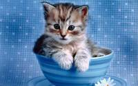 Tabby Kitten In A Blue Tea Cup