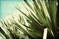 Palm Grass on Dunes