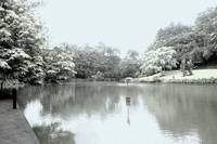 Digital Infra-red, Botanic Garden Singapore