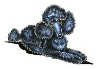 Black Miniature Poodle Lay Pretty
