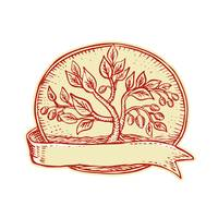 Olive Tree Ribbon Oval Etching