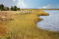 Colorful Edgartown Marsh by Carol Groenen