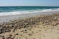 Rocky New England Beach by Carol Groenen