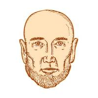 Male Bald Head Bearded Etching