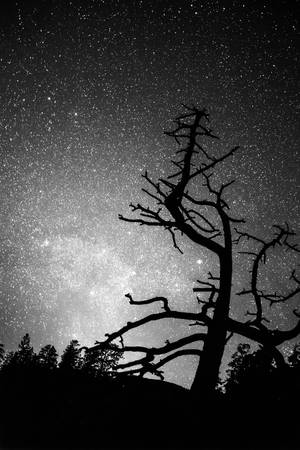 Astrophotography Night Black and White Portrait