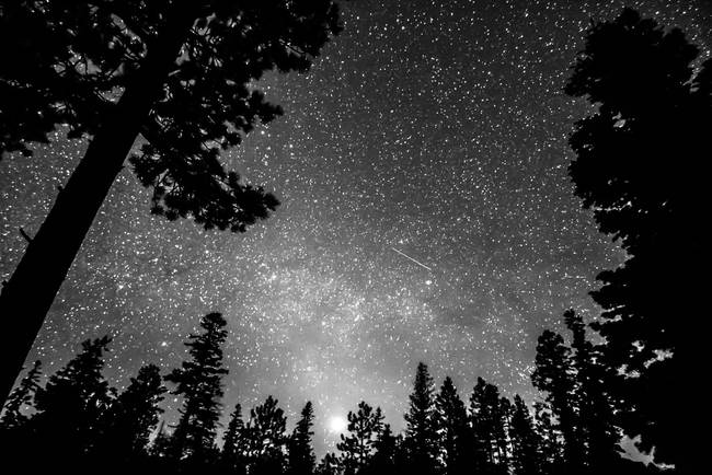 Dark Stellar Universe
