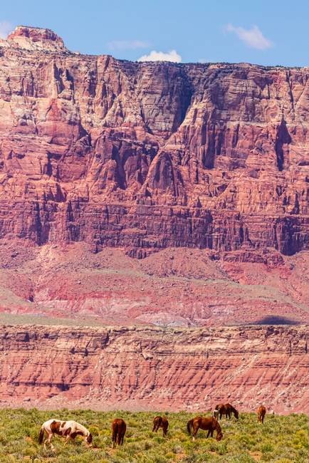 Red Cliff Horses