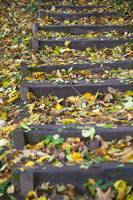 Autumn colored leafs on outdoor wooden steps