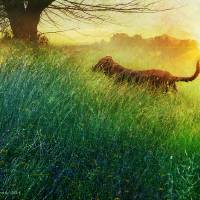 daisy mae's morning romp by r christopher vest