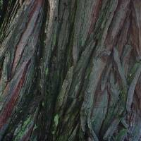 Tree Bark Art Prints & Posters by Philip Shuman