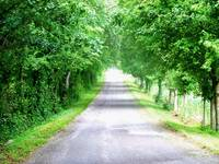 Country Road through a Row of Green Trees