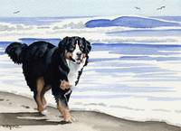 Bernese Mountain Dog at the Beach