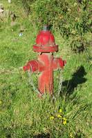 Red Hydrant and Flowers