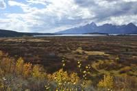 Teton View Jackson Lake Lodge 6349 by Tony Kerst