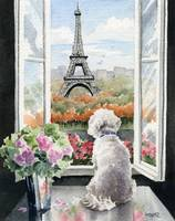 Bichon Frise in Paris