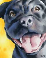 Black Pit Bull Terrier