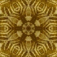 Pattern and Optics 306 by Ricki Mountain