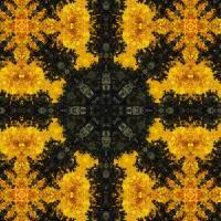 Pattern and Optics 269 by Ricki Mountain