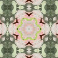 Pattern and Optics 178 by Ricki Mountain