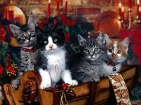 Christmas Sleigh Kittens Ring In The Season