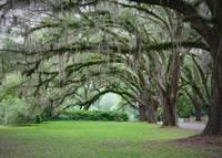 Southern Grace by Carol Groenen