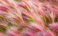 Pink and Green Grasses Abstract