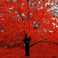 The Red Tree Abstract