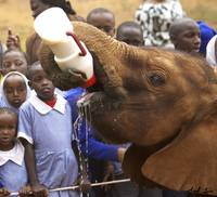 Elephant Orphanage- Baby Bottle