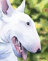 White Bull Terrier Dog