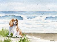 Cavalier King Charles at the beach