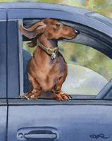 Dachshund Car Ride