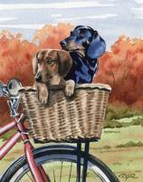 Dachshund Bike Ride