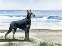 Doberman Pinscher at the Beach 3
