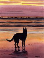 German Shepherd Sunset