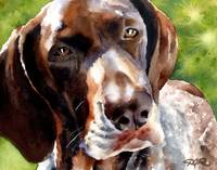 German Short Haired Pointer 3