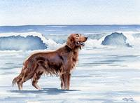 Irish Setter at the Beach 2