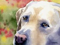 Labrador Retriever 3