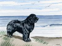 Newfoundland at the Beach