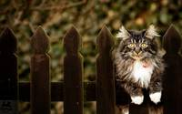 Kitten Likes To Sit On A Wooden Fence