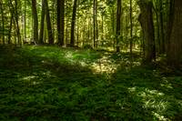 My Personal Sacred Grove