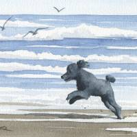 """Black Poodle at the Beach"" by k9artgallery"