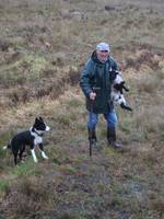 Irish Farmer carrying Lamb, followed Border Collie