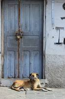 Dog Next to Door