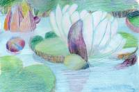 Waterlily Pond Original Watercolour