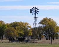 Windmill with Cattle