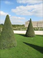 Conical trees, Versailles