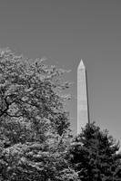 Washington II B&W