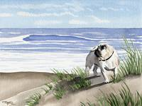 Pug on the Beach 2